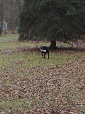 Jachthonden training bij hobbydogs in apeldoorn